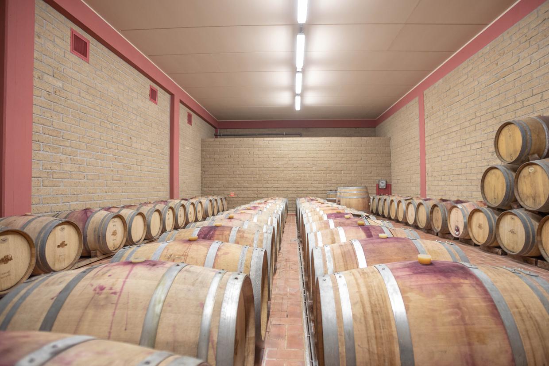 Degustazioni Vino Monte Solaio - Salvapiano Holiday Ranch